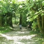 187/365 Found Heligan's lost garden