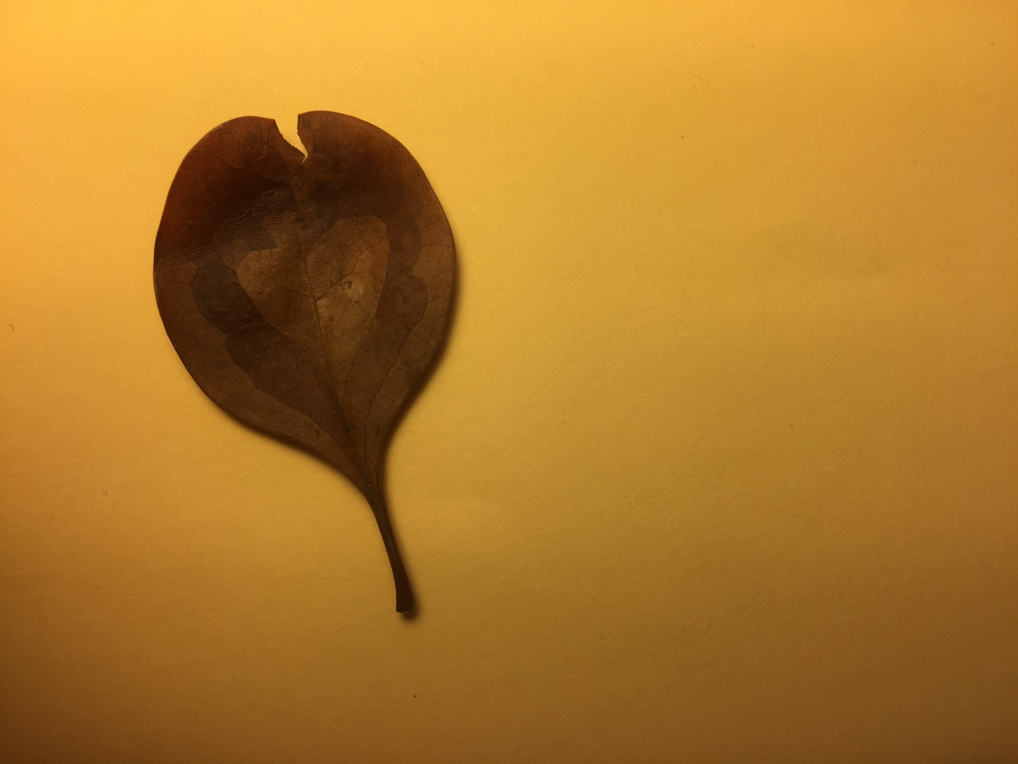 Boy Three gave me a leaf with a heart on it. It's beautiful, but you'll have to take my word for it as I've failed to take a good photo of it.
