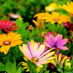Trowel And Error! Gardening With Little Ones