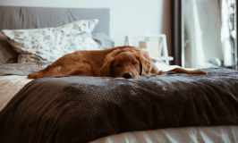 Should you allow your dog or cat in the bedroom?