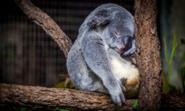 Four Ways A Good Night's Sleep Makes You Glamorous!